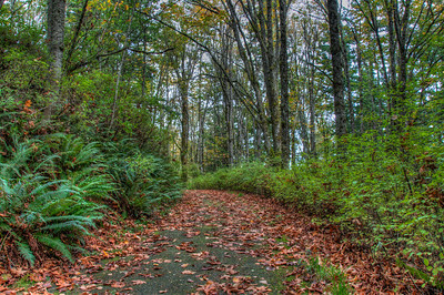 fall-leaves-forest-path