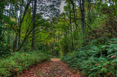 fall-leaves-forest-path-2