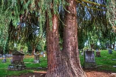 cemetery-cedar-grave-stones