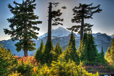 mount-baker-forest-2