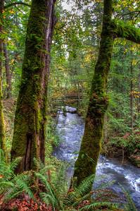 whatcom-creek-forest-4