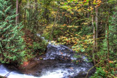 whatcom-creek-forest-5