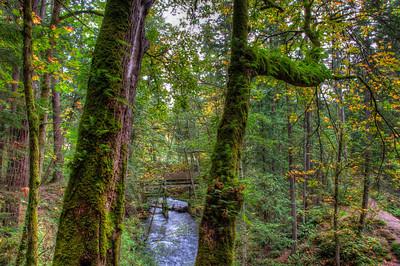 whatcom-creek-forest-3