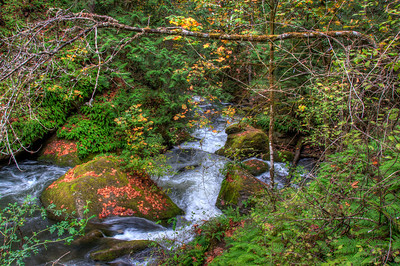 whatcom-creek-forest-2