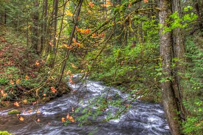whatcom-creek-forest