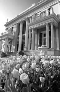 Mansion 2004 BW