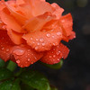 0926-rain features