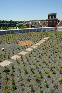 McWhorter Hall Green Roof