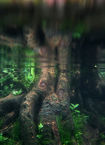 Deep Roots 2