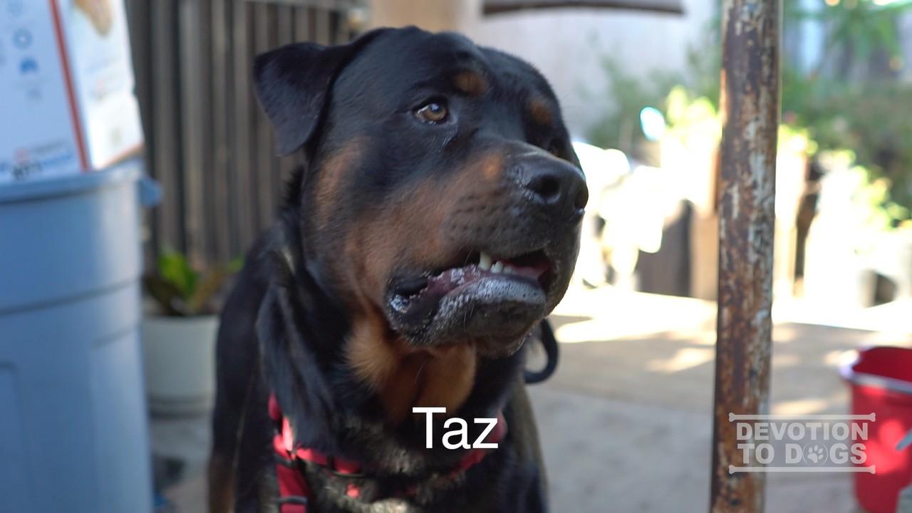 7-10 Taz