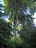 Photo #2: Belsay Gardens, Northumberland, England.