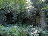 Photo #1: Belsay Gardens, Northumberland, England