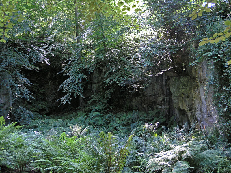 No. 1: Belsay Castle Quarry Gardens, Northumberland, England - Rock and Fern.