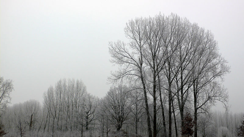Trees in Noord-Brabant, a province in southern Netherlands, shrouded in snow