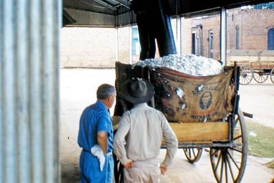 cotton wagen