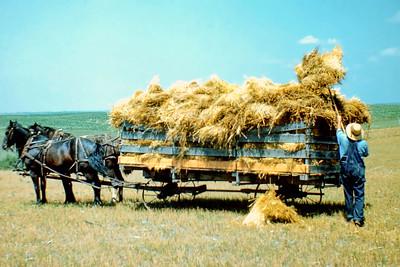 Harvest, Boone County Nebraska ca 1945 -5