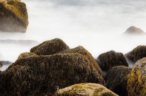 WIld, Wild Sea