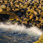 Cobble Splash