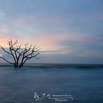 Botany Bay II