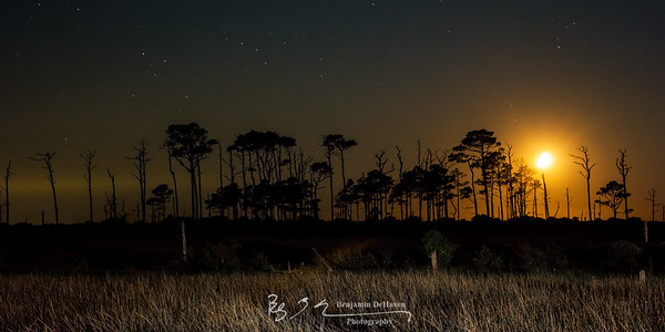 Moonset Over Trees