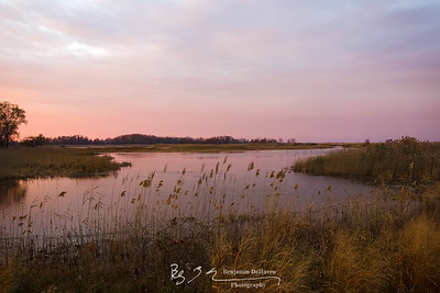 Pink Marsh Sundown