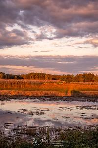 Golden Marshes