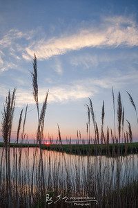 Daybreak Through The Reeds