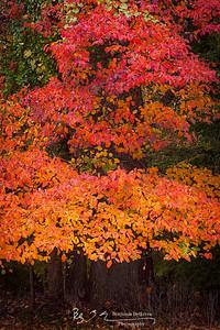 Vivid Memories Of Autumn