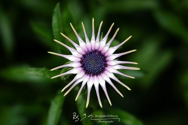 Nature's Wheel