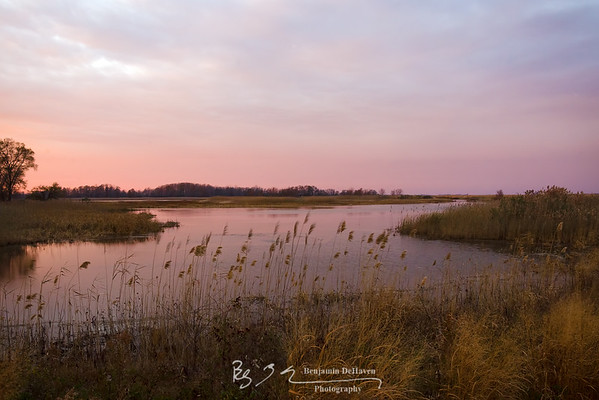 Pink Marsh Sundown