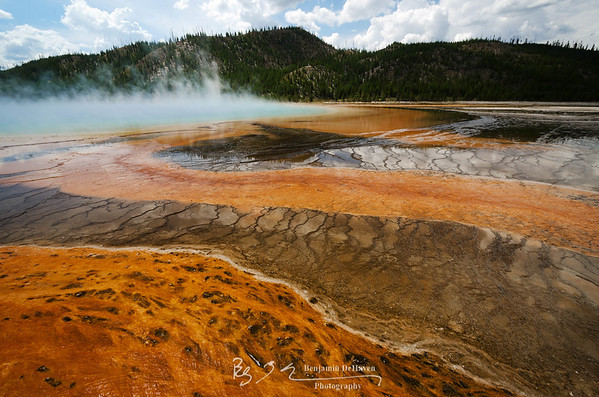 Orange Bacterial Thermophiles