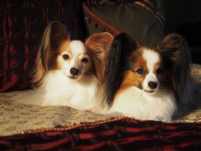 Benny & Baxter