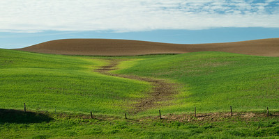 Young crop on the rolling hills of the Palouse