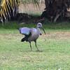 2016-09-24 Benson Tanzania Africa (Sat) Arusha - Legendary Lodge - Ibis on lawn