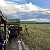 2016-10-08 Benson Tanzania Africa (Sat) Safari Day 14 Serengeti Grumeti - Muddy road - Stuck in mud and getting towed