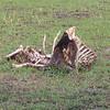 2016-10-08 Benson Tanzania Africa (Sat) Safari Day 14 Serengeti Grumeti - Wildebeeste carcass 05