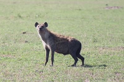 2016-10-09 Benson Tanzania Africa (Sun) Safari Day 15 Serengeti Grumeti - Hyena smile