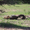 2016-10-10 Benson Tanzania Africa (Mon) Safari Day 16 Serengeti Grumeti - Antelope carcass