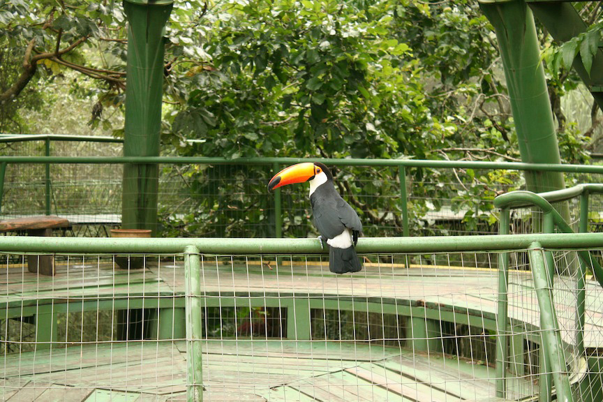 Tucan in Aviary of Santa Cruz Mariposario