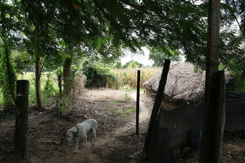 Servicios Agrícolas de Reforestación del Medioambiente en Santa Cruz, Bolivia