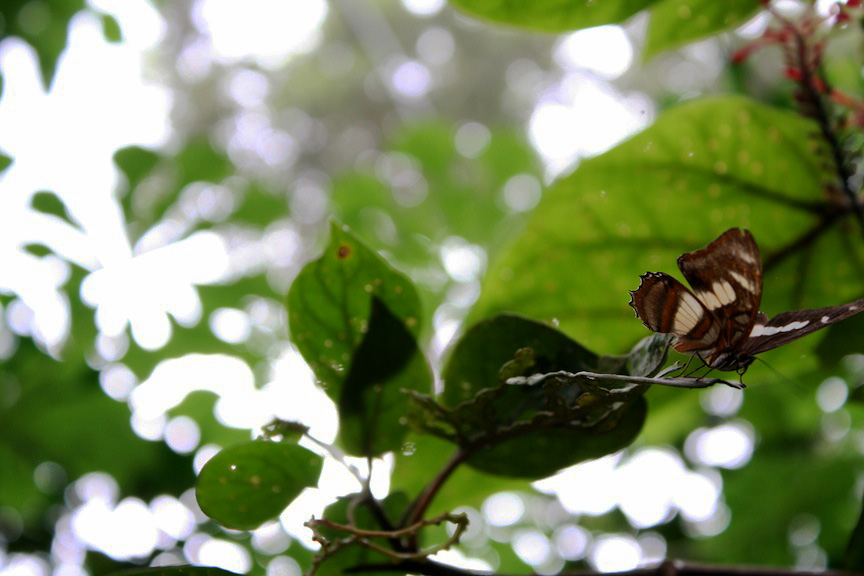 Tregg my butterfly friend in Santa Cruz Mariposario