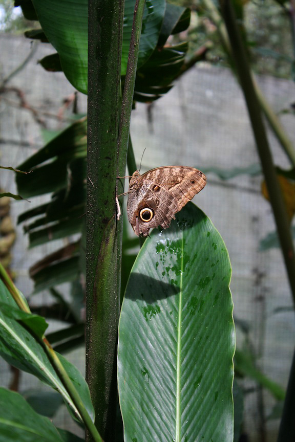 Butterfly in Santa Cruz Mariposario