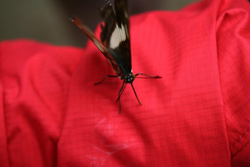 Tregg my butterfly friend!