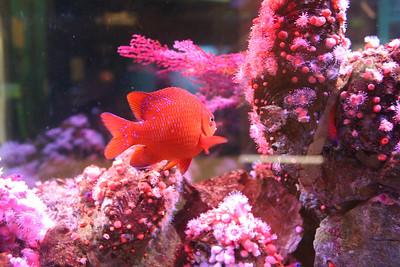 Cabrillo Marine Aquarium - Spring 2013