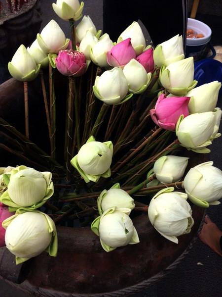 Lotus flower offerings at base of Doi Suthep, Chiang Mai