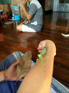 Praying mantis friend