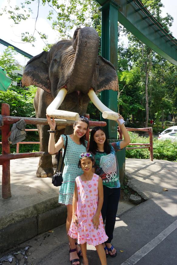 Movie star elephant!