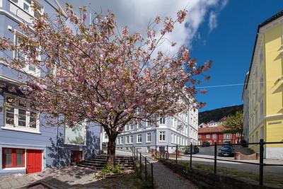 Norway, Bergen, Spring 2019.