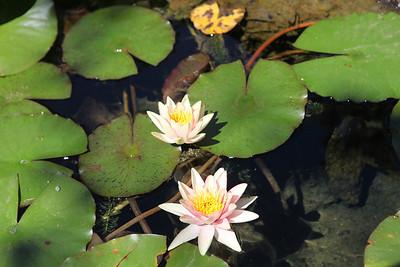 Berkeley Botanical Garden 2013