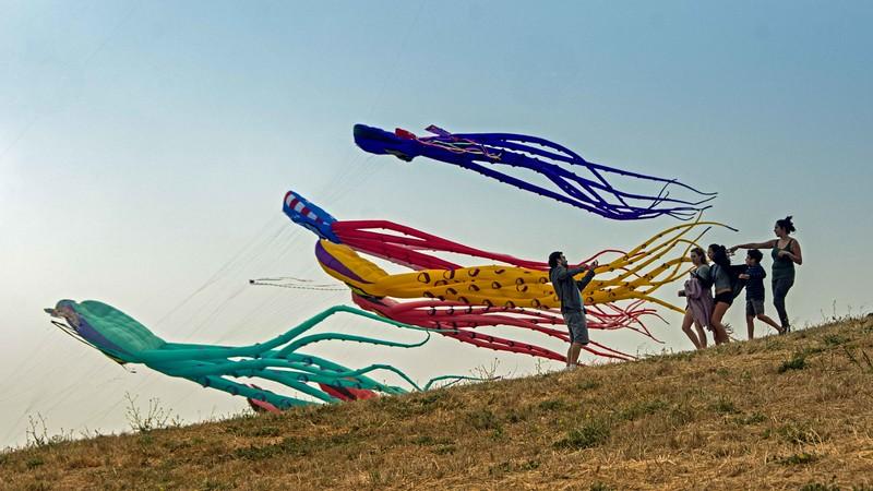 Berkeley Kite Festival, July 2016